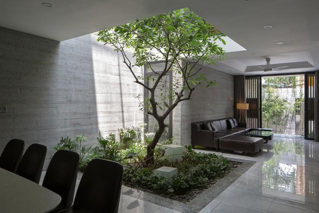 Ngôi nhà nhìn đâu cũng thấy cây xanh và có hẳn một vườn rau trên sân thượng cực rộng ở Hà Nội - Ảnh 3.
