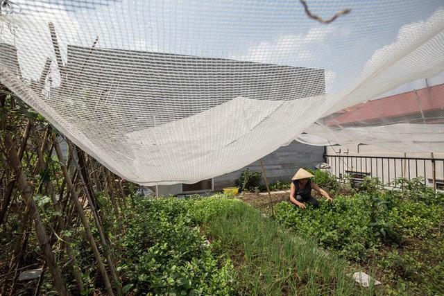 Ngôi nhà nhìn đâu cũng thấy cây xanh và có hẳn một vườn rau trên sân thượng cực rộng ở Hà Nội - Ảnh 22.