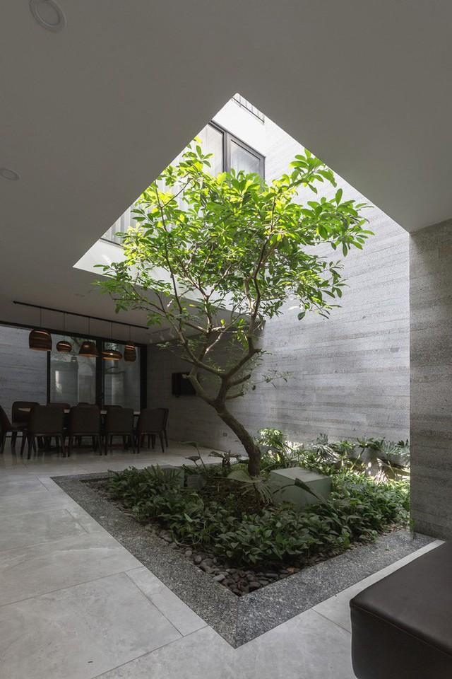 Ngôi nhà nhìn đâu cũng thấy cây xanh và có hẳn một vườn rau trên sân thượng cực rộng ở Hà Nội - Ảnh 5.