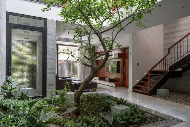 Ngôi nhà nhìn đâu cũng thấy cây xanh và có hẳn một vườn rau trên sân thượng cực rộng ở Hà Nội - Ảnh 7.