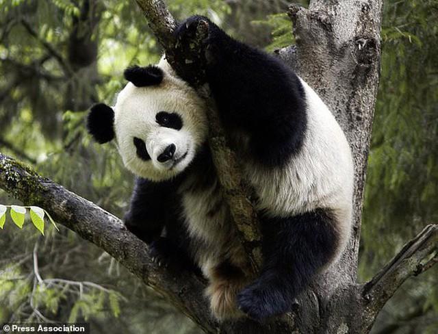60% cây trồng và 50% động vật hoang dã có thể bị biến mất trên toàn cầu chỉ vì điều này - Ảnh 3.