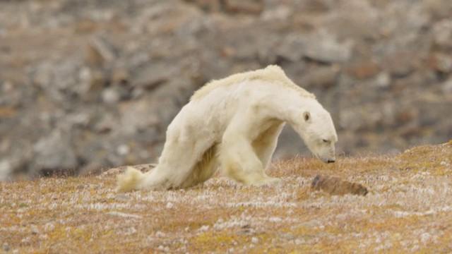 60% cây trồng và 50% động vật hoang dã có thể bị biến mất trên toàn cầu chỉ vì điều này - Ảnh 4.