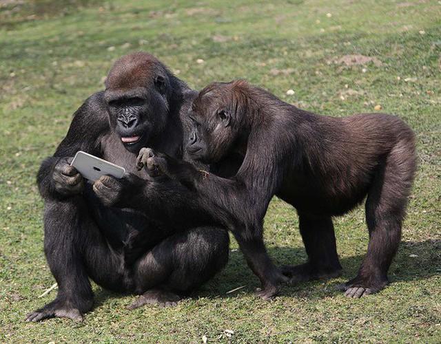 Những cú lừa Cá Tháng Tư tưởng đùa mà hóa thật: Khỉ đột sử dụng iPad, đưa con người lên sao Hoả - Ảnh 2.