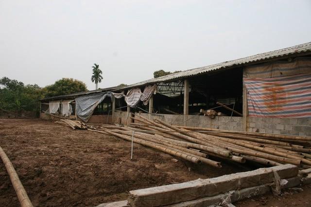Hà Nam: Xót xa cảnh trại lợn bỏ trống, người nông dân phá chuồng làm thuê trả nợ - Ảnh 5.
