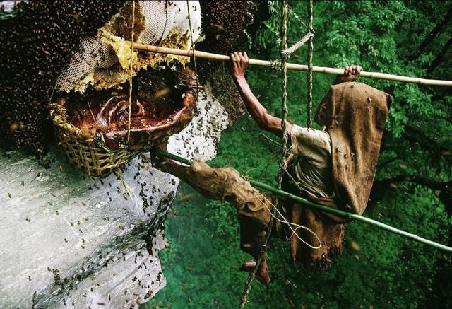 Rùng mình với thứ mật ong chết người, có thể khiến cả đoàn quân phát điên - Ảnh 3.