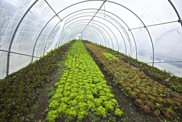 Liệu nông trại đô thị có thể trở thành anh hùng giải cứu thế giới khỏi nạn đói trong tương lai? - Ảnh 3.