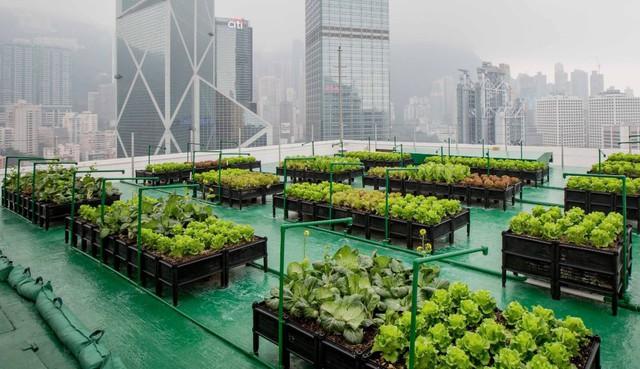 Liệu nông trại đô thị có thể trở thành anh hùng giải cứu thế giới khỏi nạn đói trong tương lai? - Ảnh 4.