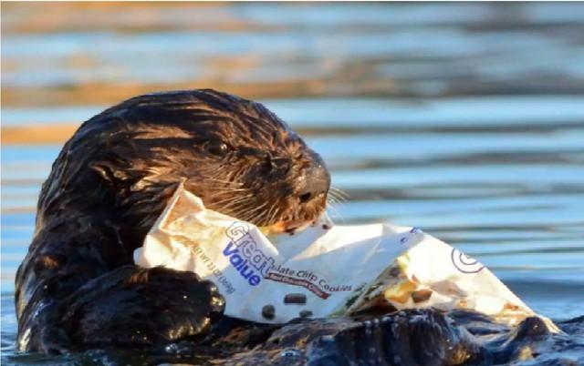 Báo động thật rồi: Ô nhiễm rác nhựa ngày càng gây nguy hiểm cho cuộc sống chúng ta - Ảnh 2.