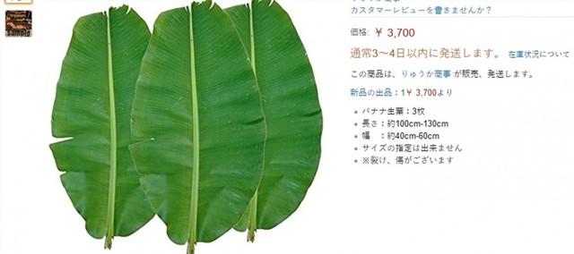 Sự thật bất ngờ khúc chuối dành cho lợn ăn tại Việt Nam lại có giá 300.000 đồng ở Nhật Bản? - Ảnh 3.