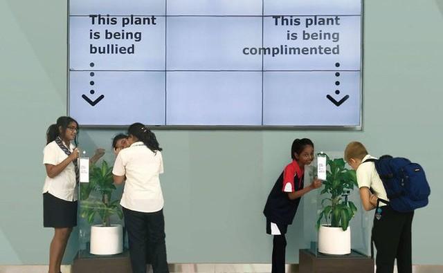 IKEA kêu gọi học sinh mắng chửi chậu cây cả tháng trời, kết quả sẽ khiến bạn tròn mắt - Ảnh 1.