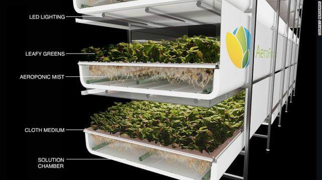 Mô hình trồng rau không cần đất, ánh sáng, dùng ít nước hơn 20 lần nhưng năng suất đạt gần gấp đôi so với nông nghiệp truyền thống - Ảnh 1.