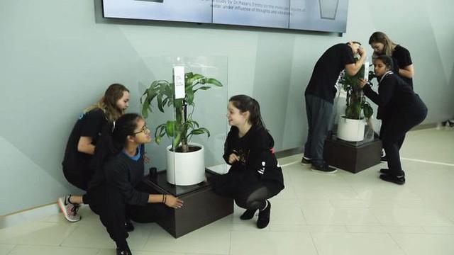 IKEA kêu gọi học sinh mắng chửi chậu cây cả tháng trời, kết quả sẽ khiến bạn tròn mắt - Ảnh 7.