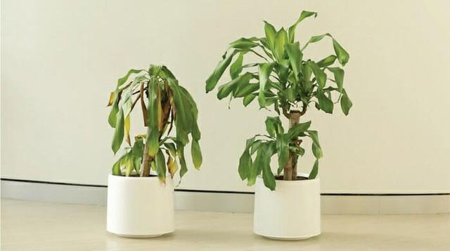 IKEA kêu gọi học sinh mắng chửi chậu cây cả tháng trời, kết quả sẽ khiến bạn tròn mắt - Ảnh 8.