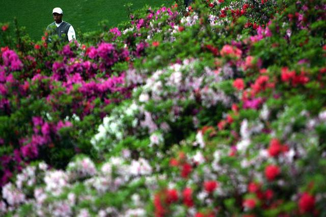 Đã là người hâm mộ golf, chắc chắn không thể quên được những khoảnh khắc đẹp ngút trời của Tiger Woods trong từng mùa giải - Ảnh 40.