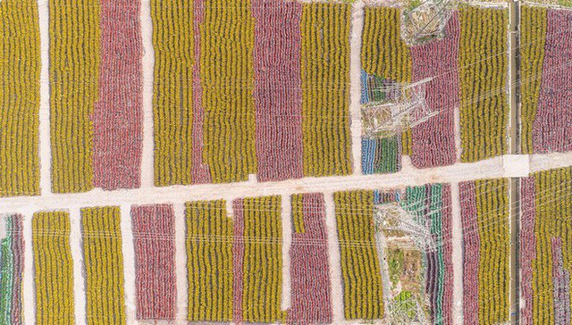 Hãi hùng ngắm nhìn mồ chôn tập thể của hàng triệu chiếc xe đạp tại Trung Quốc - Ảnh 8.