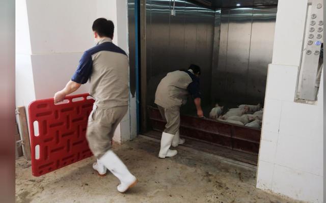 Người Trung Quốc xây hẳn khách sạn 7 tầng để... nuôi lợn - Ảnh 4.