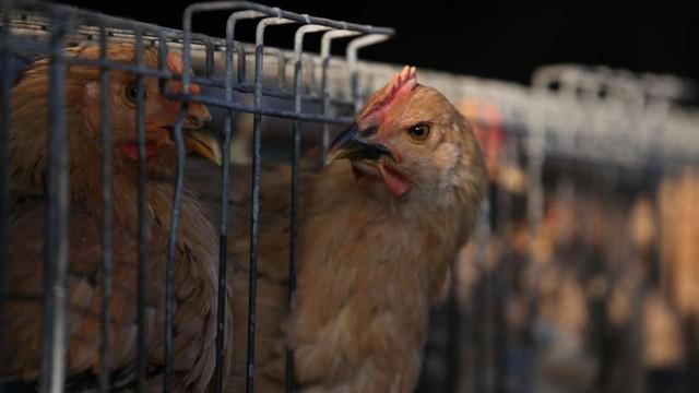 Case study kinh điển ở Harvard: Gã điên đốt tiền tấn để nghiên cứu kỹ làm kính áp tròng cho… gà, cung ứng cho đa số trại gà lớn khắp nước Mỹ và trở thành triệu phú đô la - Ảnh 2.