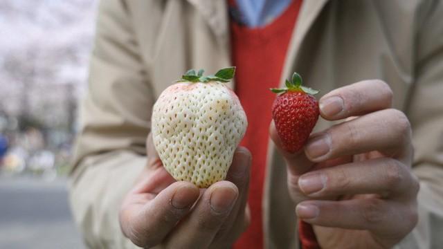Những loại quả ngon miễn bàn nhưng giá cả siêu đắt đỏ chỉ có giới nhà giàu mới dám ăn ở Nhật Bản - Ảnh 4.