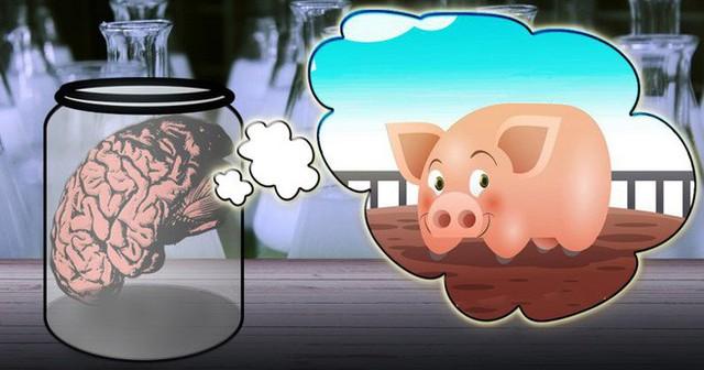 Giữ não bộ lợn sống trong khi cơ thể đã bị đem giết thịt: Thí nghiệm khiến chúng ta phải định nghĩa lại cái chết - Ảnh 2.