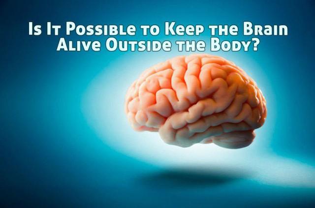 Giữ não bộ lợn sống trong khi cơ thể đã bị đem giết thịt: Thí nghiệm khiến chúng ta phải định nghĩa lại cái chết - Ảnh 3.