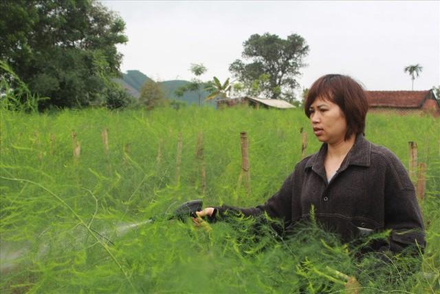 Chiêm ngưỡng vườn măng tây cho thu nhập gần 2 tỷ/năm - Ảnh 10.