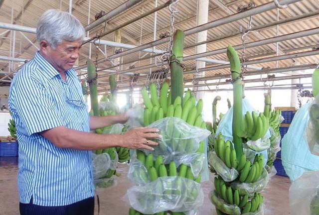 Hành trình đưa chuối Việt sang Nhật: Lần lượt 3 sếp lớn siêu thị qua thăm nơi sản xuất, đạt 200 tiêu chuẩn mới lên được kệ, khi siêu thị khác muốn đặt hàng lại kiểm nghiệm từ đầu - Ảnh 3.