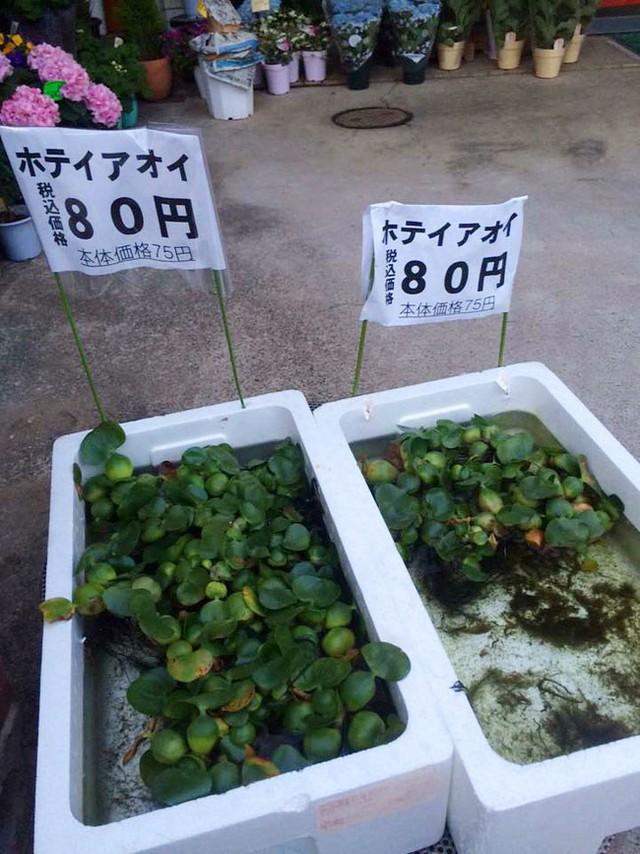 Chùm ảnh: Choáng với những món đồ ở Việt Nam thì cho không ai lấy, sang Nhật Bản thì thành cao lương mĩ vị mất cả đống tiền mới mua được - Ảnh 7.