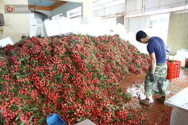Về Bắc Giang thăm người dân Lục Ngạn trước thông tin 10 ngàn 3kg vải thiều: Làm gì có chuyện chúng tôi ném vải xuống sông - Ảnh 1.