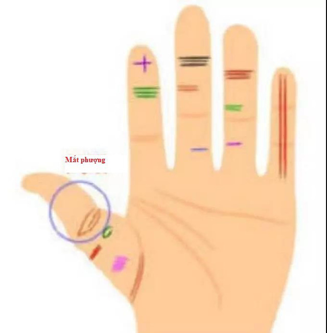 Tay trái nắm quyền tay phải nắm tiền: Tiết lộ ba bàn tay bẩm sinh có quyền thế và tiền tài - Ảnh 2.