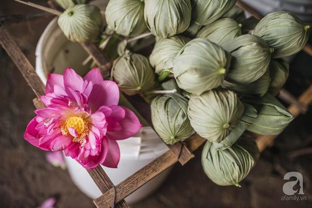 Trà dệt hương sen - thứ trà ủ cả ngàn bông sen Hồ Tây đầy tinh tế của Hà Nội - Ảnh 16.