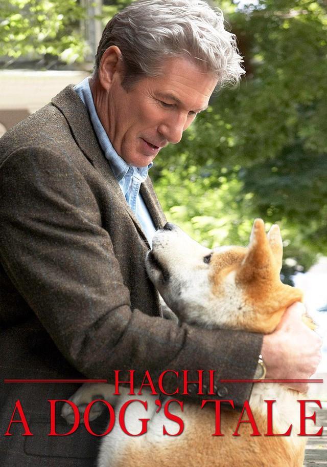 """""""Hachi: A Dog's Tale"""": Một chú chó có thể dạy bạn những gì, về tình yêu? - Ảnh 1."""
