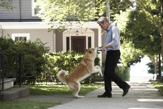 """""""Hachi: A Dog's Tale"""": Một chú chó có thể dạy bạn những gì, về tình yêu? - Ảnh 3."""