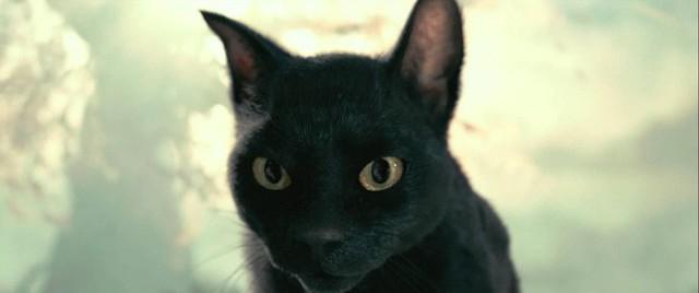 Lý do khiến Võ Tắc Thiên không sợ trời, không sợ đất nhưng lại khiếp đảm những con mèo cho đến tận lúc chết - Ảnh 4.