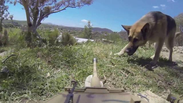Bài học khởi nghiệp từ chuyện gậy ông đập lưng ông khi dùng chó đánh xe tăng: Nghe chuyên gia ít thôi, hãy trải nghiệm thực tế! - Ảnh 2.