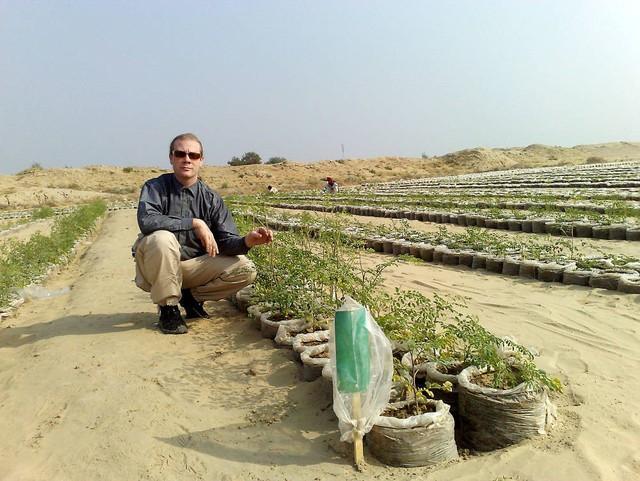 Các nhà khoa học đã trồng được cây tại sa mạc nóng tới 50 độ C - Ảnh 1.