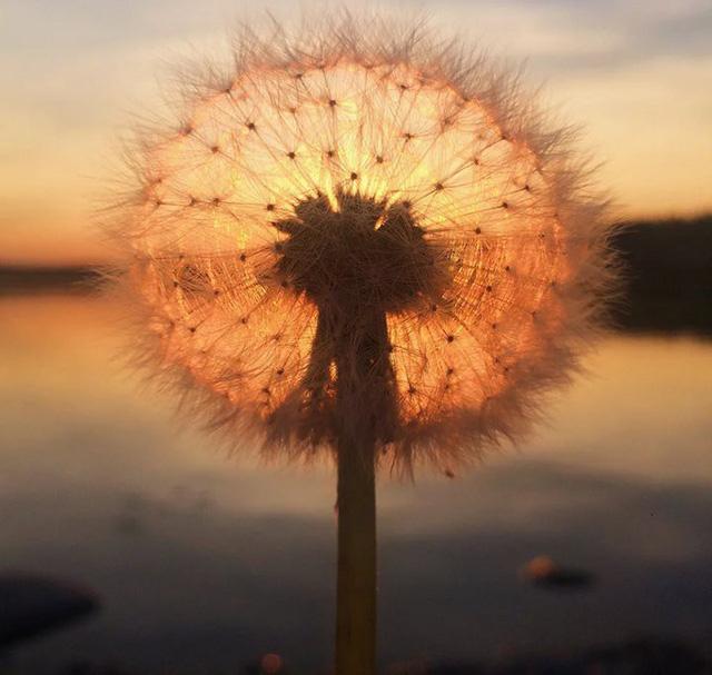 đầu tư giá trị - photo 19 1532235613268152163506 - Đây là 21 bức ảnh xuất sắc nhất cuộc thi ảnh đẹp quốc tế chụp từ iPhone