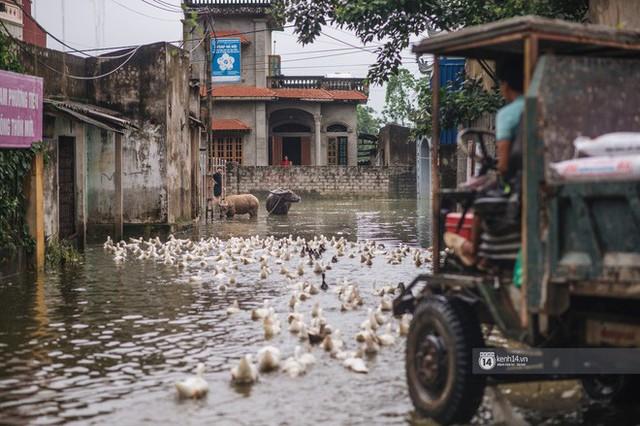 Chùm ảnh: 1 tuần sau lũ lớn, người dân Hà Nội vẫn phải chèo thuyền di chuyển giữa biển rác thải nổi lềnh bềnh - Ảnh 16.