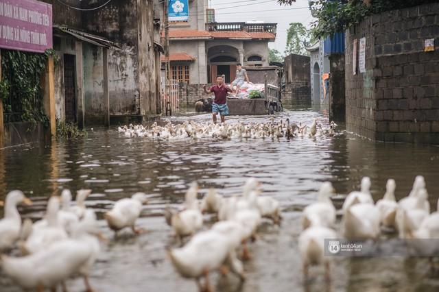 Chùm ảnh: 1 tuần sau lũ lớn, người dân Hà Nội vẫn phải chèo thuyền di chuyển giữa biển rác thải nổi lềnh bềnh - Ảnh 5.