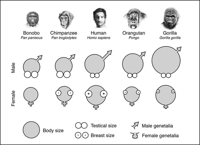 Đây là sai lầm tai hại nhất của tiến hóa trên cơ thể người đàn ông? - Ảnh 2.