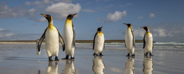 Vương quốc chim cánh cụt lớn nhất thế giới đã sụp đổ một cách bí ẩn mà khoa học vẫn không hiểu tại sao - Ảnh 2.