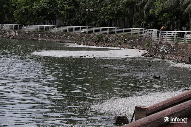 Thời tiết thay đổi, cá chết nổi trắng nhiều góc của Hồ Tây - Ảnh 1.