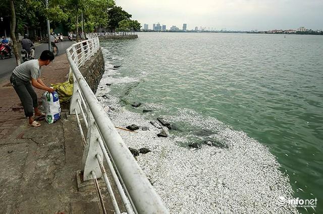 Thời tiết thay đổi, cá chết nổi trắng nhiều góc của Hồ Tây - Ảnh 9.