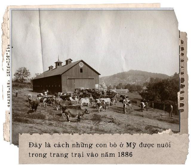 Hơn 100 năm trước, người Mỹ giải quyết vấn nạn thực phẩm bẩn, giả và ngâm hóa chất thế nào? - Ảnh 1.