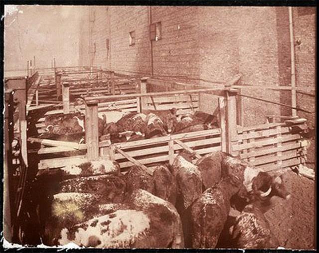 Hơn 100 năm trước, người Mỹ giải quyết vấn nạn thực phẩm bẩn, giả và ngâm hóa chất thế nào? - Ảnh 3.