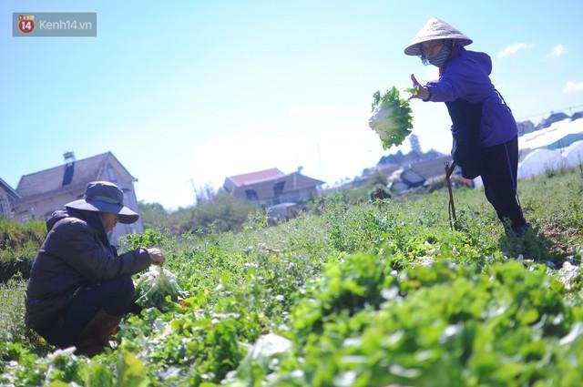 Nông dân khốn khổ vì nông sản Trung Quốc nhái hàng Đà Lạt: 3 tháng trồng khoai không bán được đồng nào, chỉ biết khóc... - Ảnh 2.