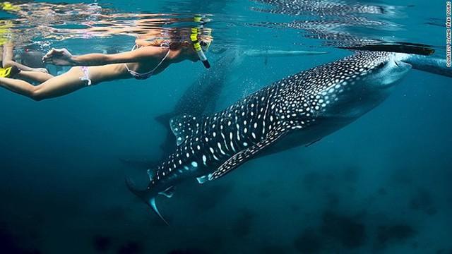 Việc nhẹ thu nhập cực cao: Sống ở resort sang chảnh, bơi cùng cá mập, chơi dù lượn để nhận ngay 2,8 tỉ đồng - Ảnh 3.
