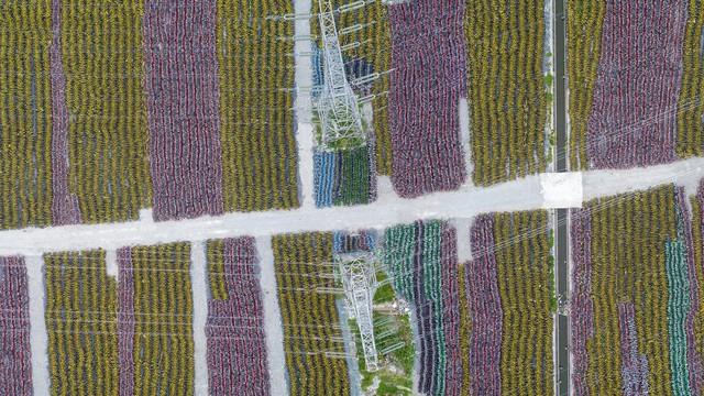 Những nghĩa trang xe đạp chi chít đến nghẹt thở chỉ có ở Trung Quốc - Ảnh 1.