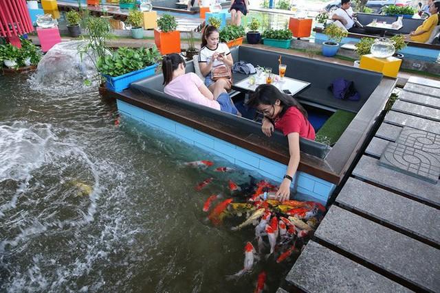 Trải nghiệm uống cà phê giữa hồ cá Koi tiền tỉ ở Sài Gòn - Ảnh 2.