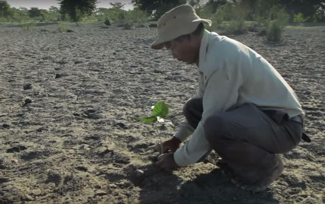 Mỗi ngày trồng 1 cái cây từ 40 năm trước, người đàn ông biến hòn đảo suýt bị nhấn chìm thành thiên đường nhiệt đới - Ảnh 6.
