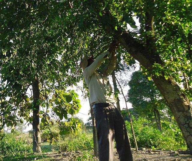 Mỗi ngày trồng 1 cái cây từ 40 năm trước, người đàn ông biến hòn đảo suýt bị nhấn chìm thành thiên đường nhiệt đới - Ảnh 9.